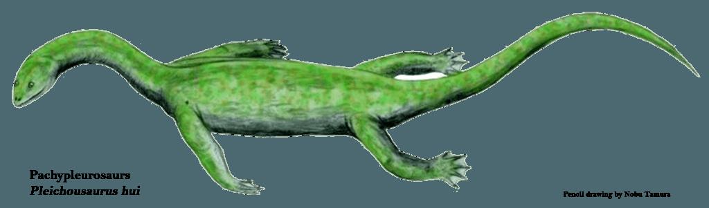 Pachypleurosaurs Pleichousaurus hui