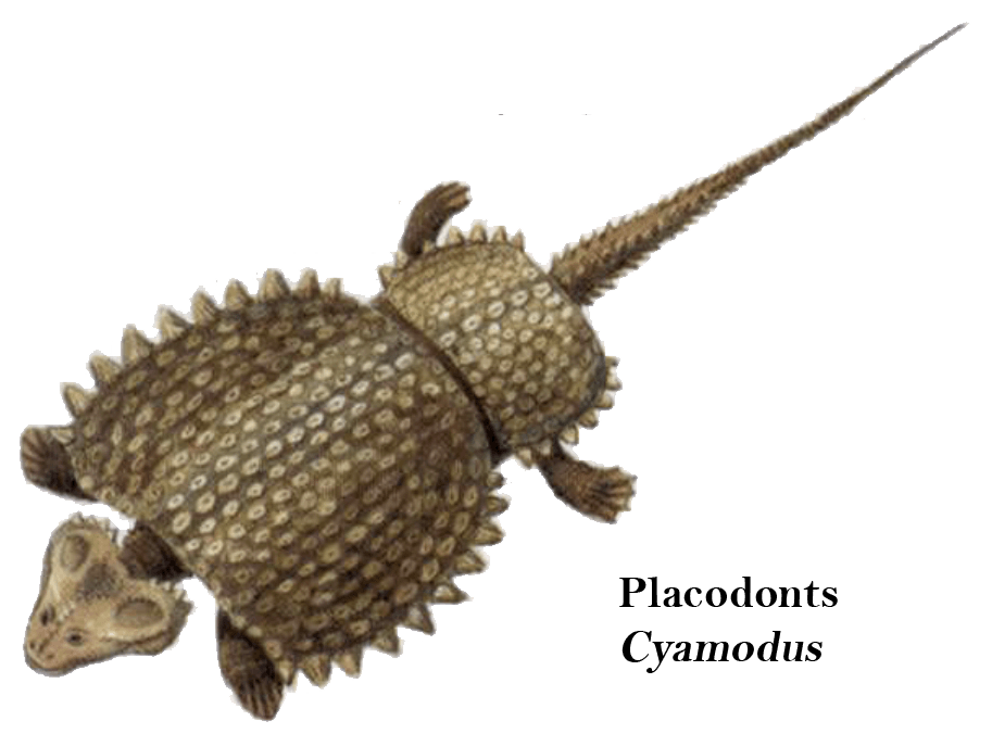 Placodonts Cyamodus