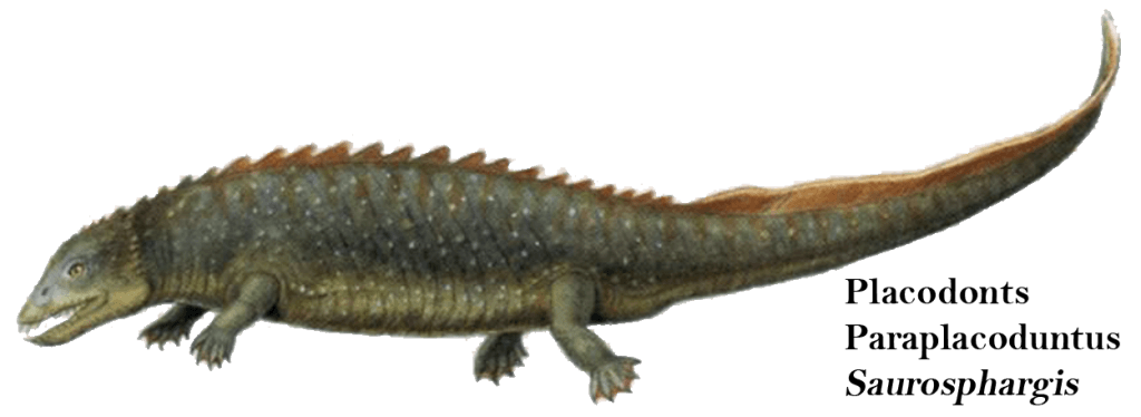 Placodonts Paraplacoduntus Saurosphargis