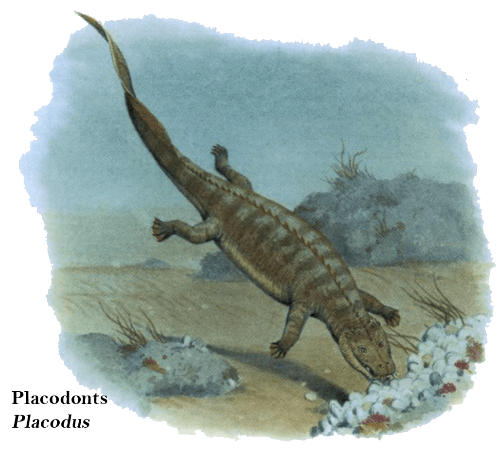 Placodonts Placodus