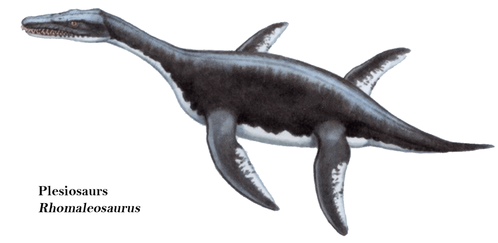 Plesiosaurs Rhomaleosaurus