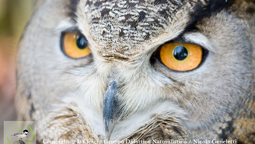 SENSORY ORGANS: VIEW OF OWLS