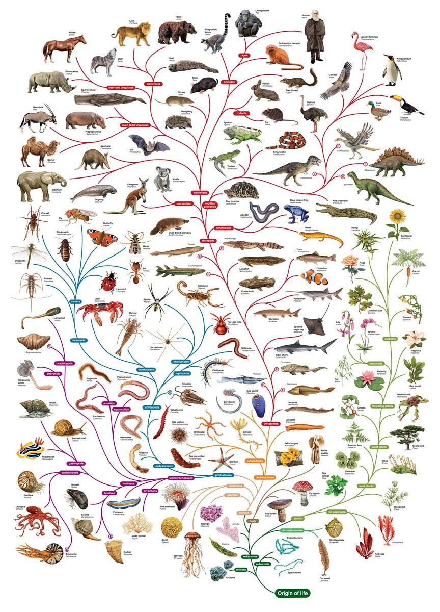 Post 062 - L'origine delle specie_1