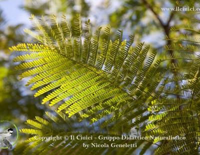 Velocità di fotosintesi: da cosa dipende?