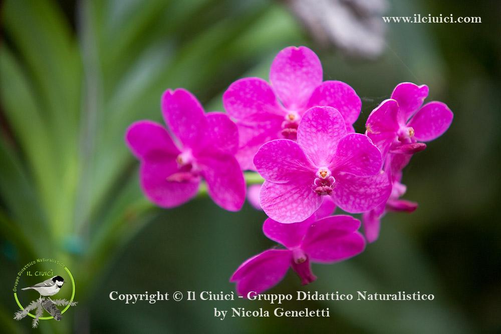 simbiosi orchidea
