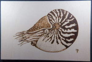 home decor Pyrography on wood Nautilus