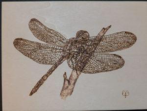 Pirografia su legno libellula