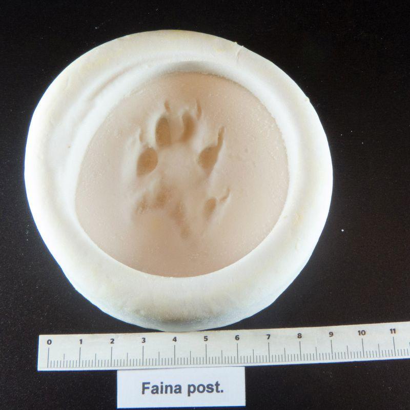 beech marten footprint mold cast