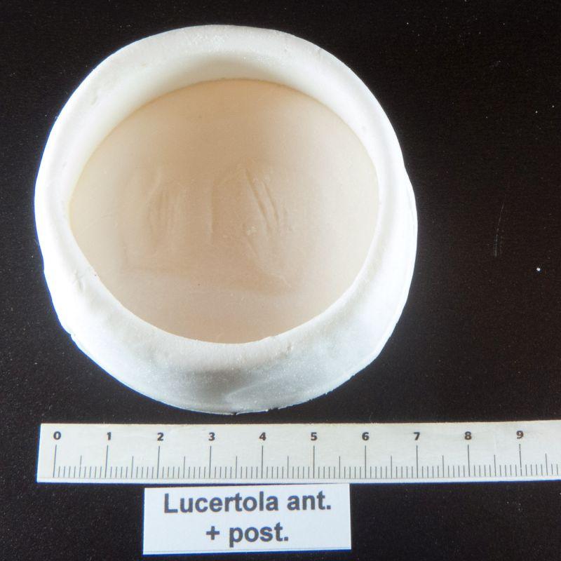 lizard footprint mold cast