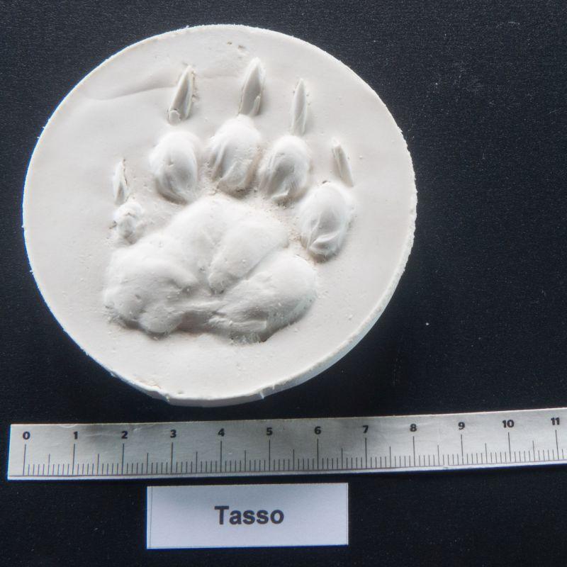 badger footprint mold cast